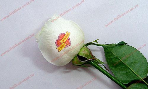 Примеры готовой наклейки на цветке
